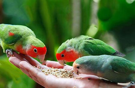 Picture for category Թռչունների կեր