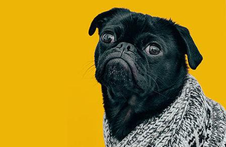 "Picture for category <div class=""menuitem""><div class=""menitem_dog_image""></div><div class=""menitemtext"" >Շներ</div></div>"