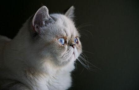 "Picture for category <div class=""menuitem""><div class=""menitem_cat_image""></div><div class=""menitemtext"" >Կատուներ</div></div>"