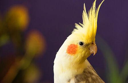 "Picture for category <div class=""menuitem""><div class=""menitem_bird_image""></div><div class=""menitemtext"" >Թռչուններ</div></div>"